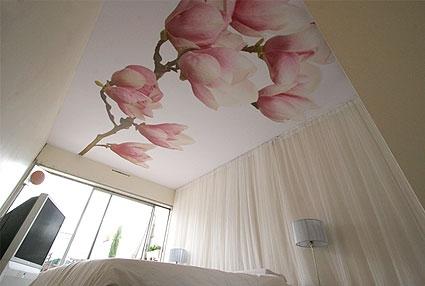 adsz-magnolia-p-425×286